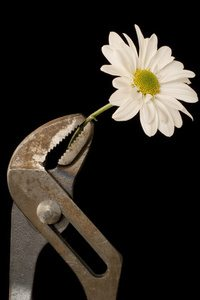 a wrench holding a flower